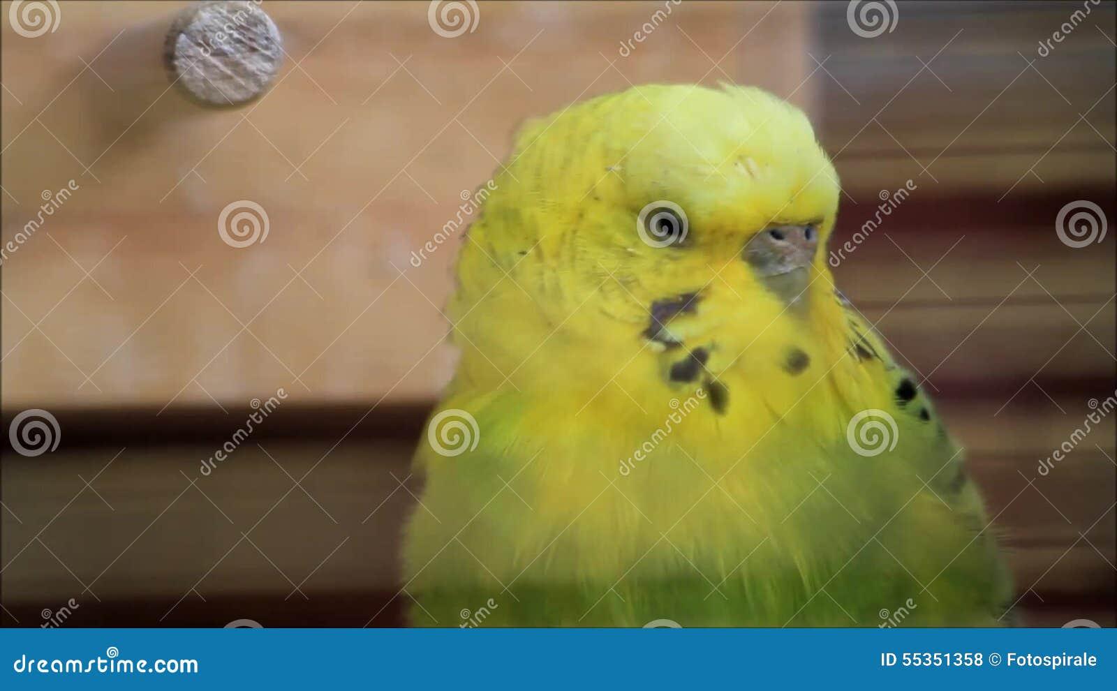 το πουλί σας είναι πολύ μεγάλα βίντεο μαύρο μουνί μαλάκες