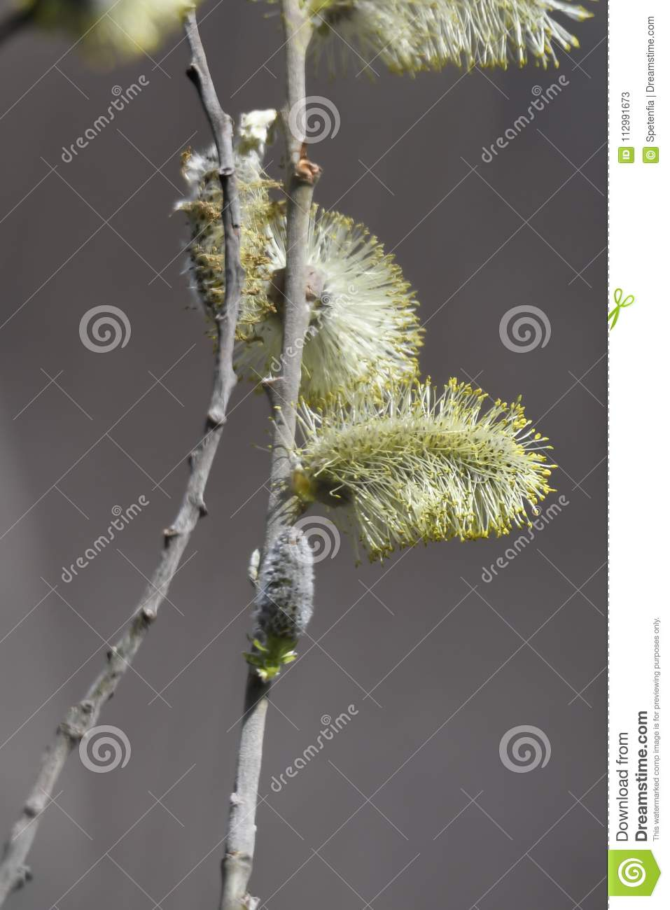 Buds on the tree