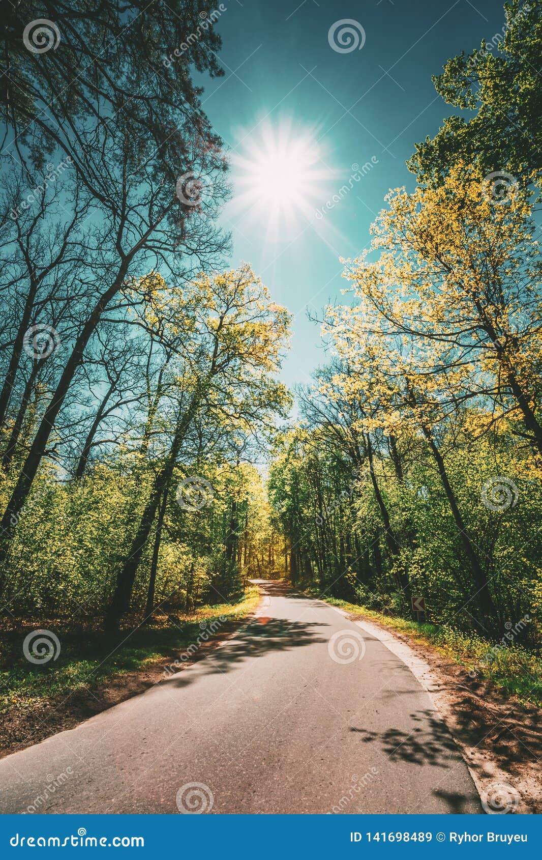 Buen día de Asphalt Forest Road In Sunny Summer Carril que corre a través de bosque de hojas caducas de la primavera