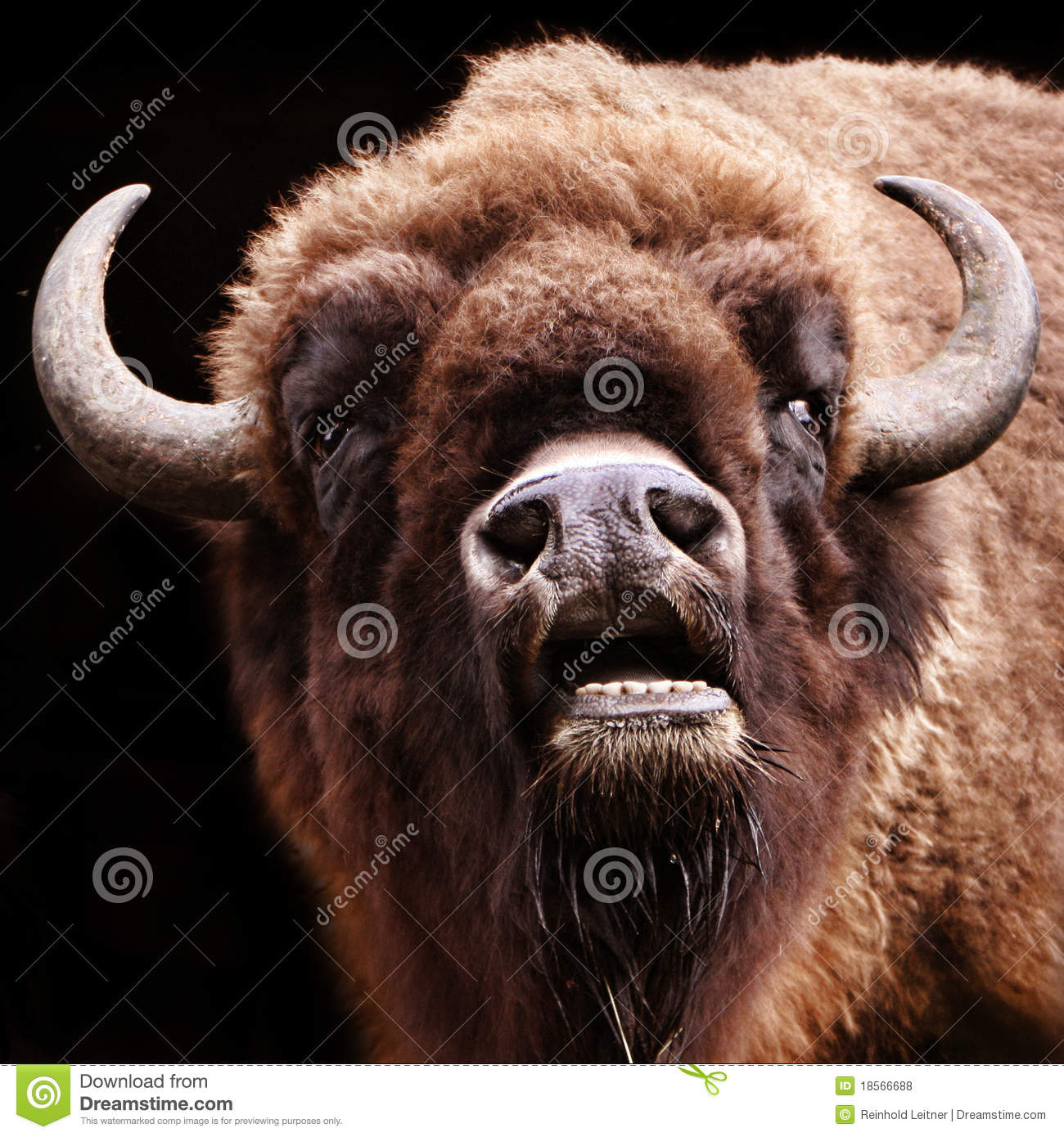 a buffalo common metaphor Freshman highschool metaphors a buffalo common metaphor over the past few decades the high plains have consistently been losing its population so.