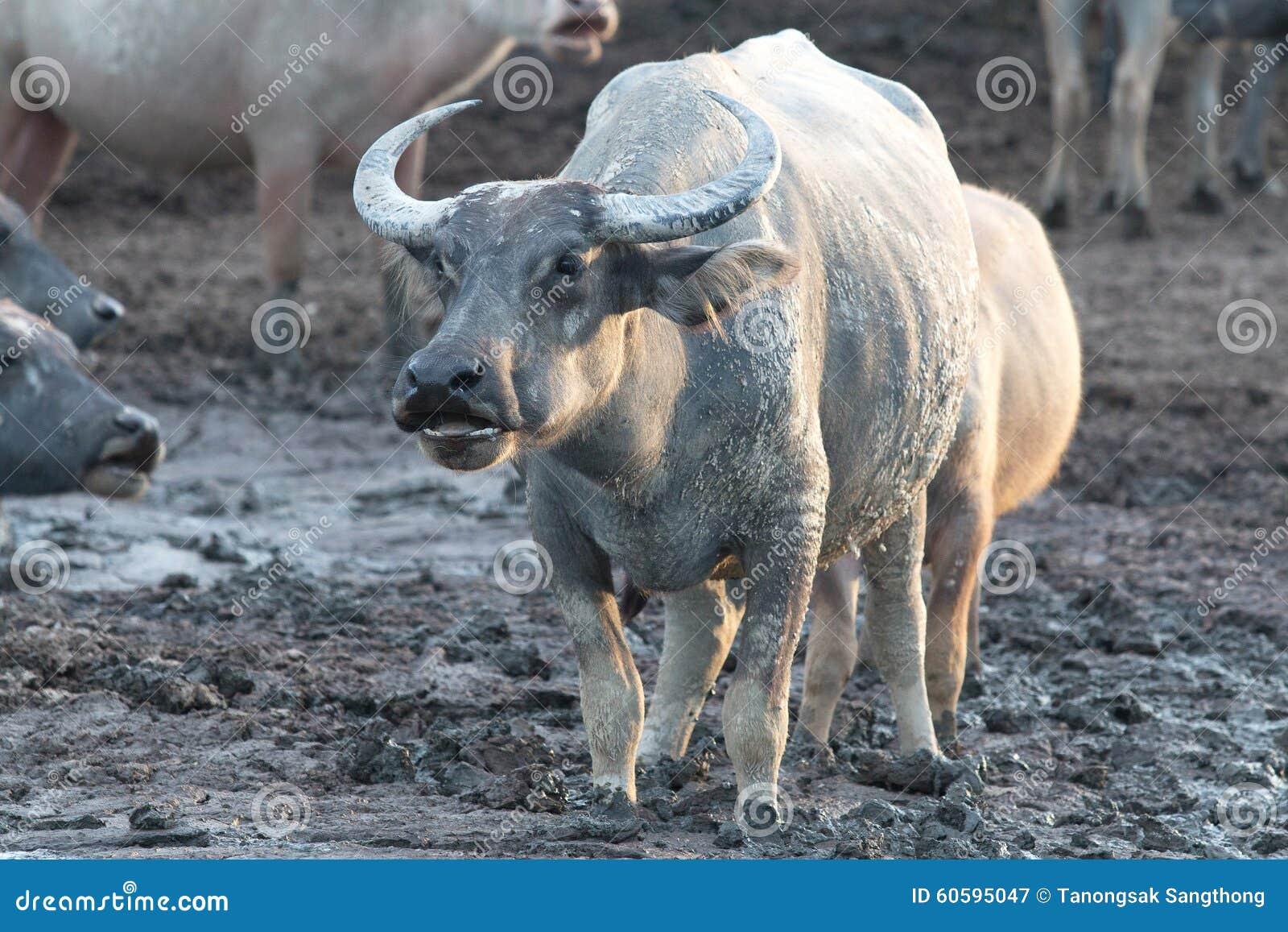 Buffalo su field9