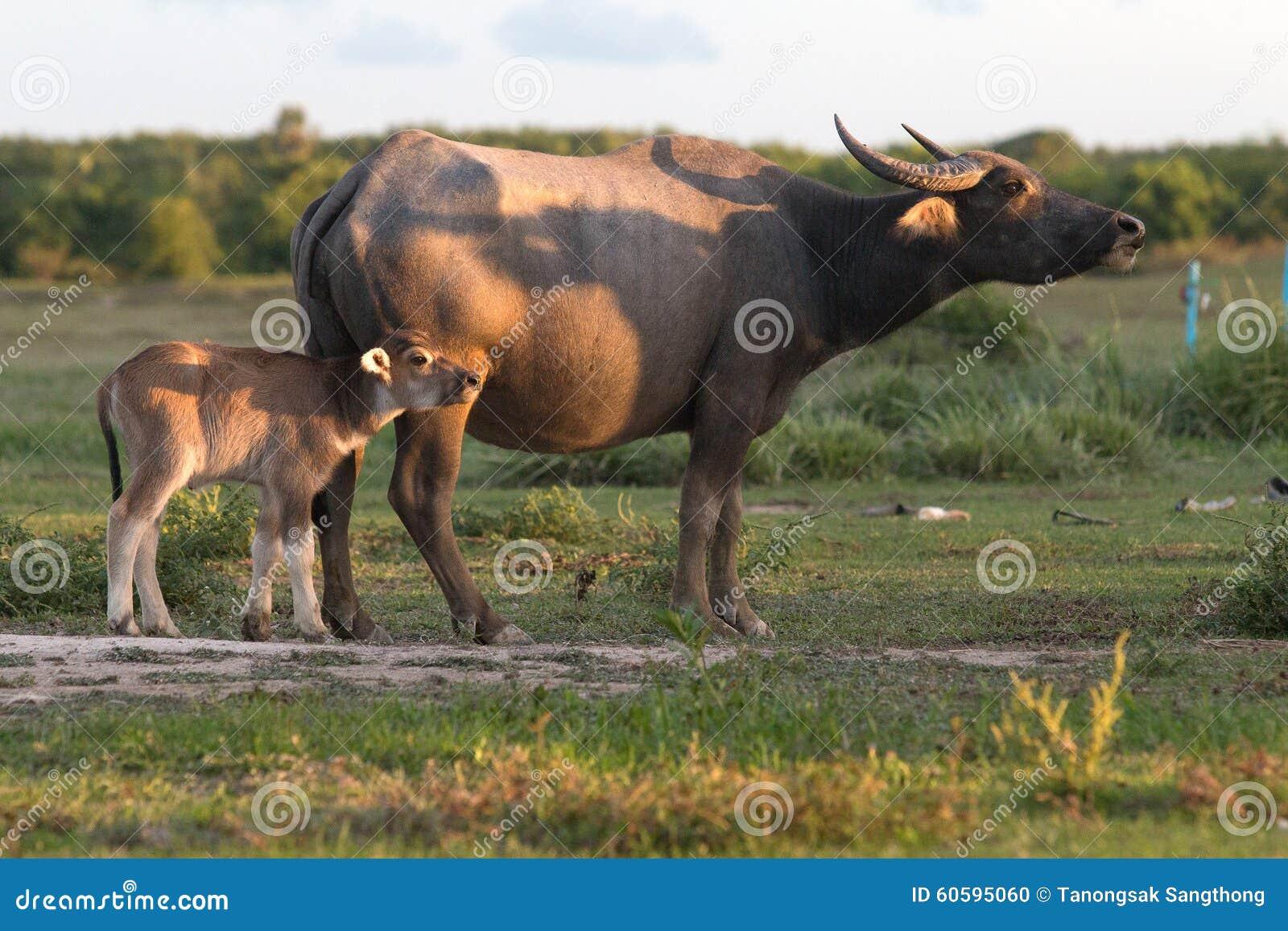 Buffalo su field8
