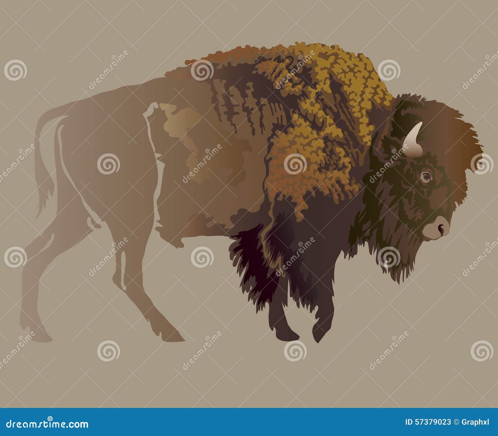 Buffels Het gezicht van Hand-drawn vrouwen illustration