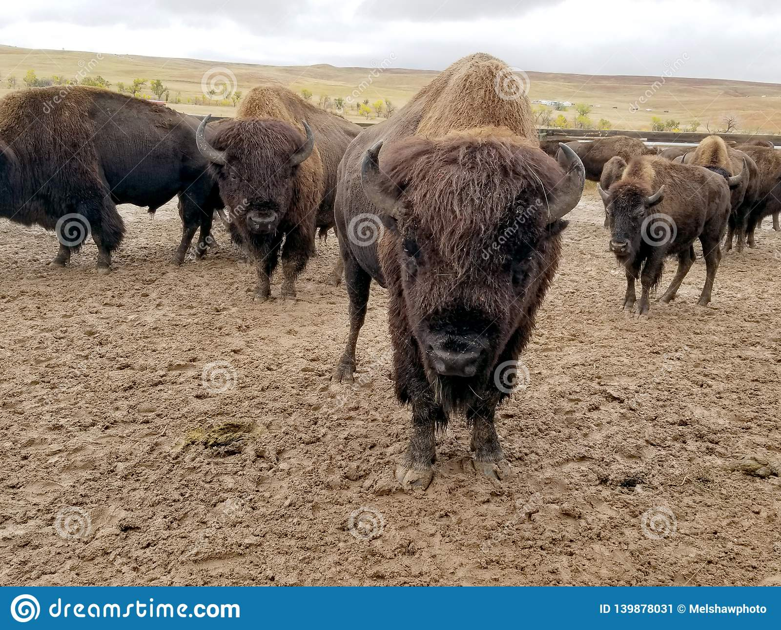 Buffelslooppas, Custer, Zuid-Dakota