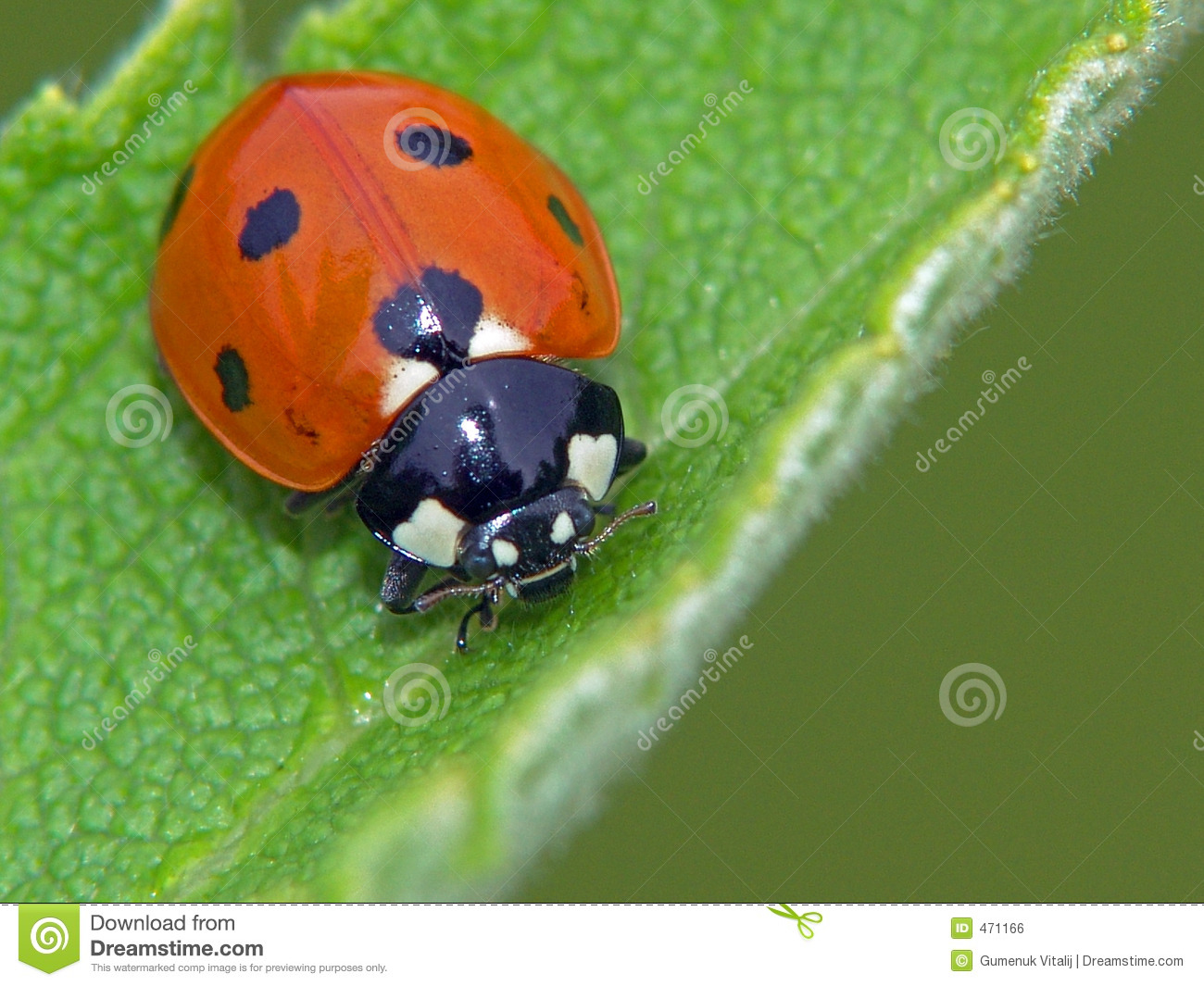 Download The bug. stock photo. Image of field, points, assistant - 471166