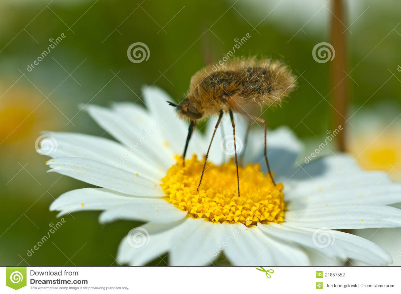 Bug and Chamomile Plant