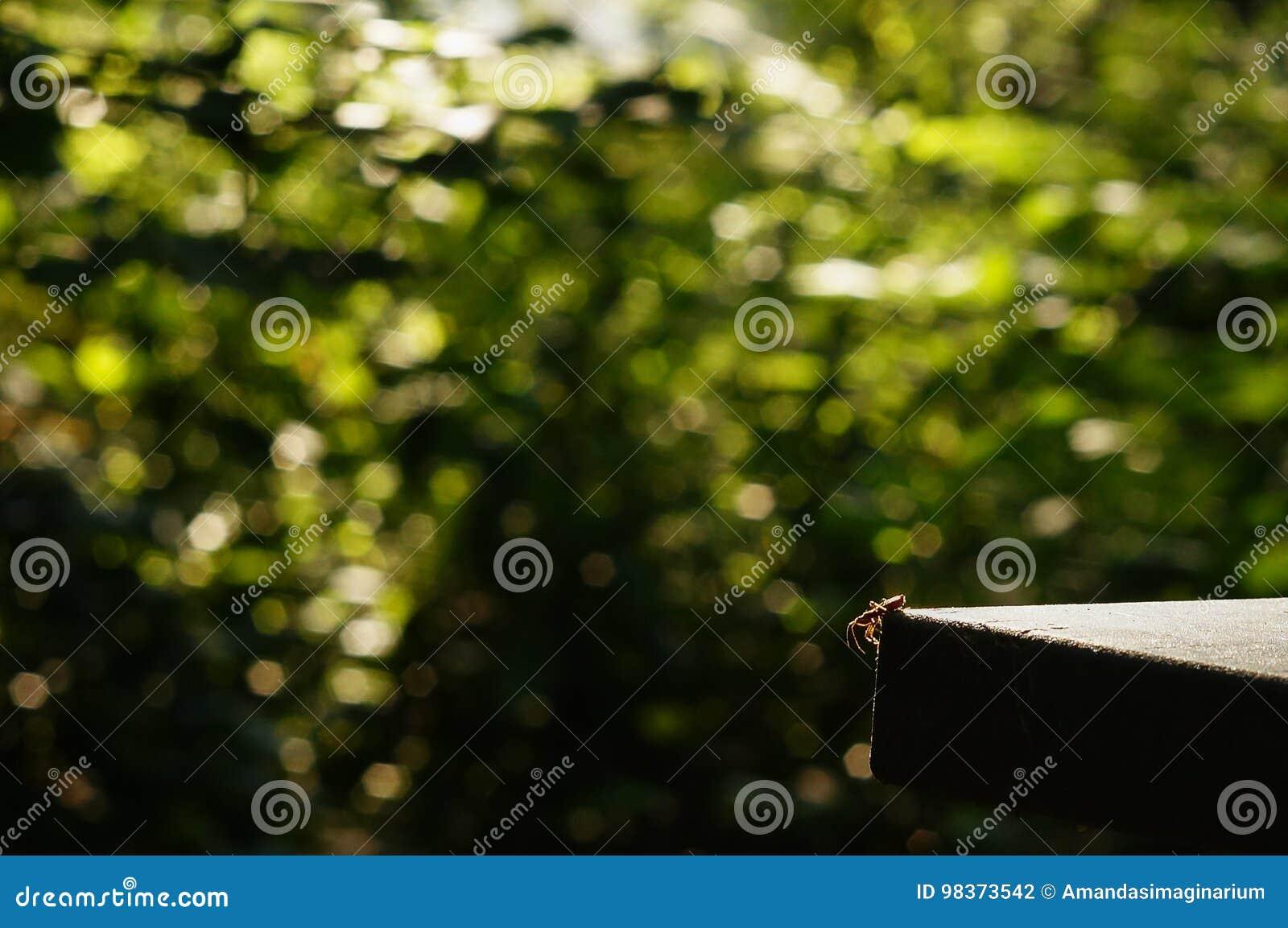 Bug On A Foliage Background With Circular Bokeh Stock Photo - Image