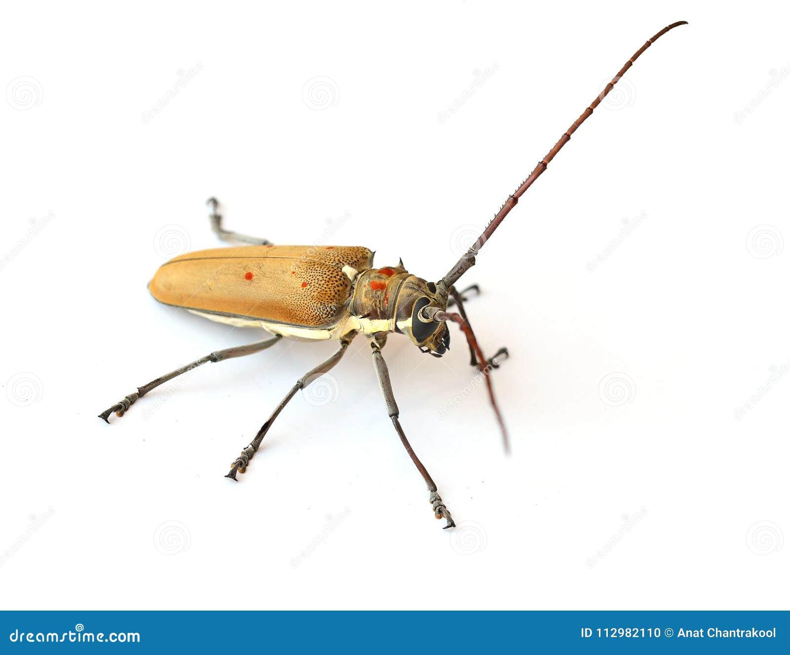 Bug isolated white background