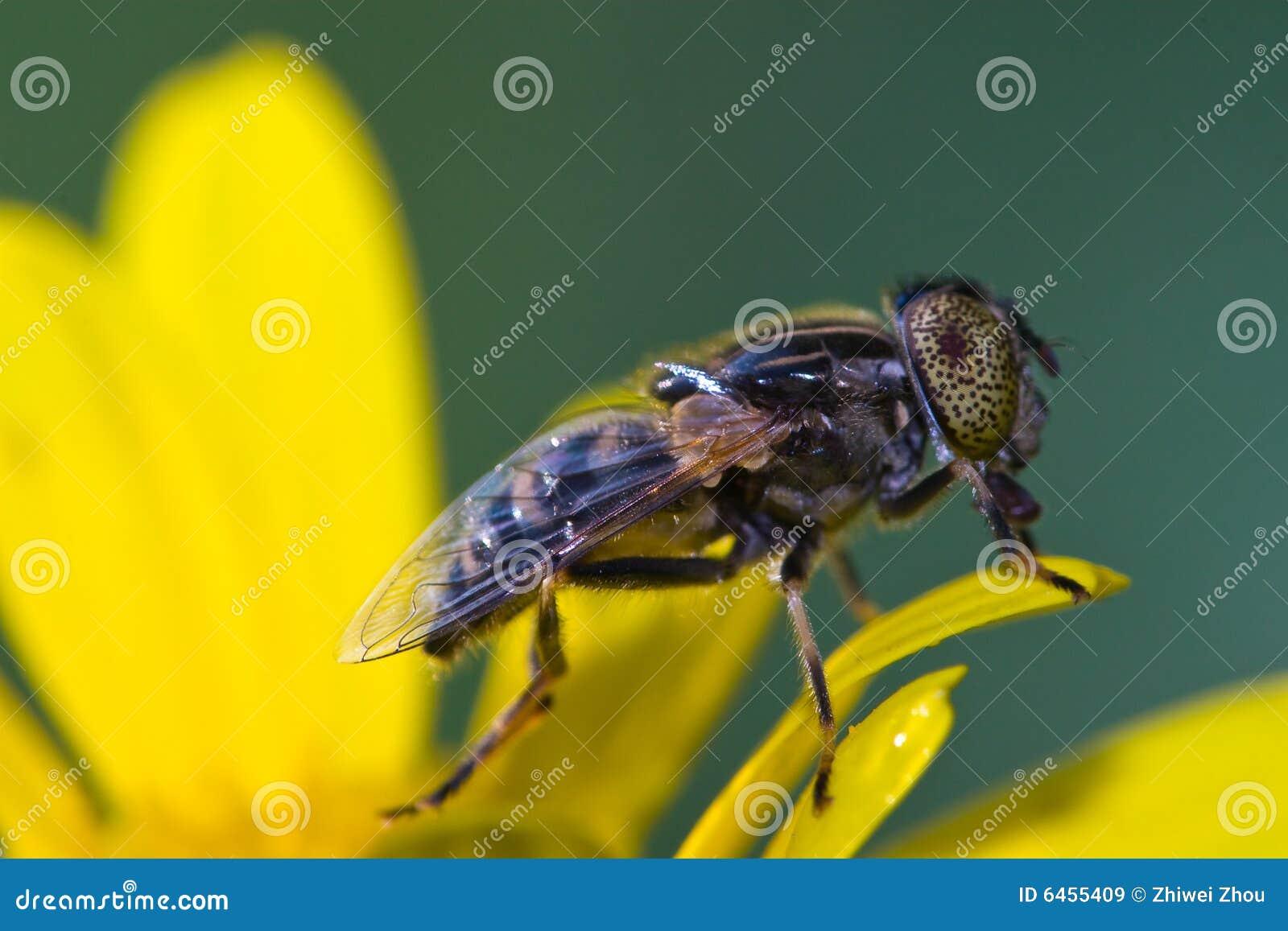 Bug makro