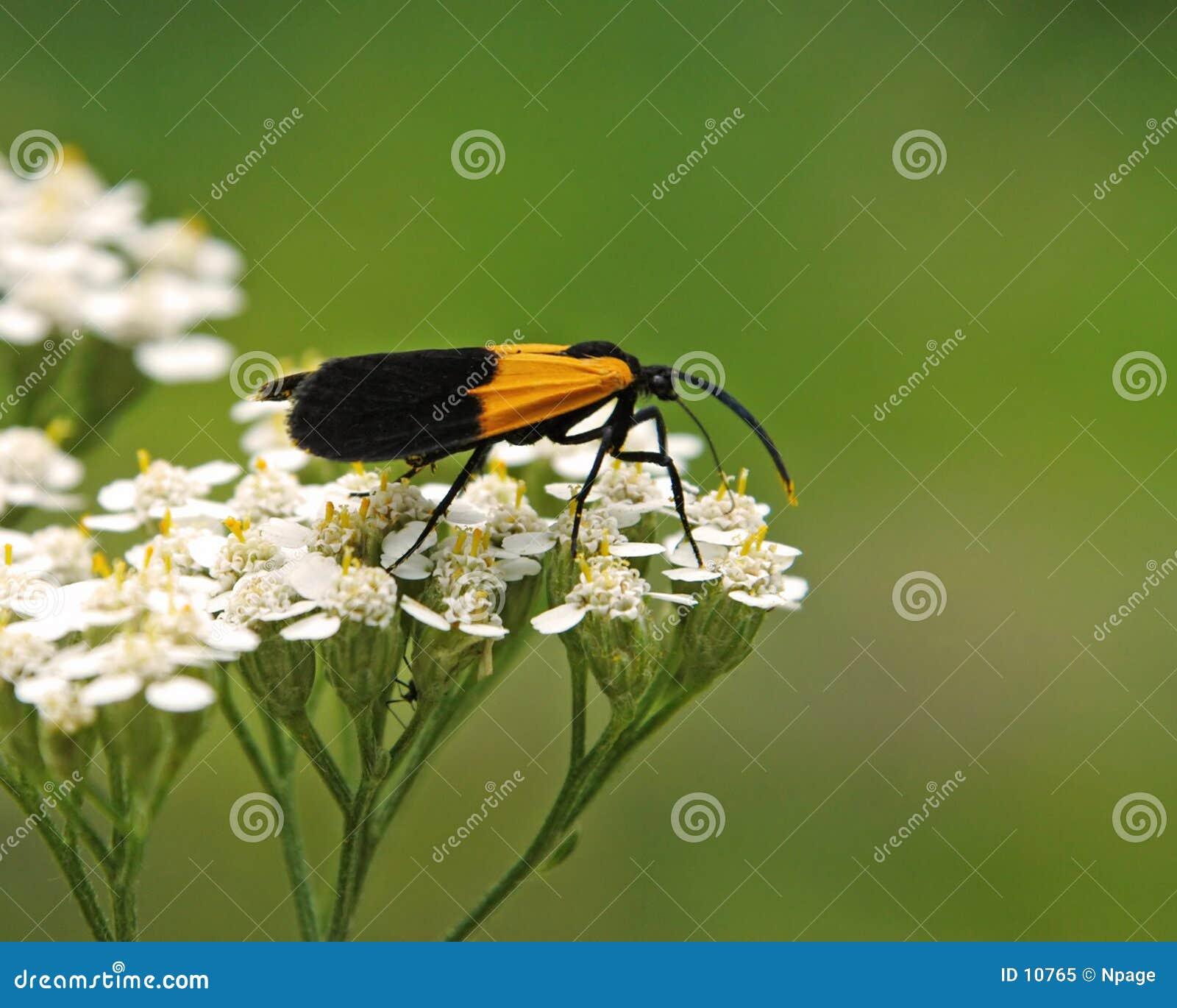 Bug No1
