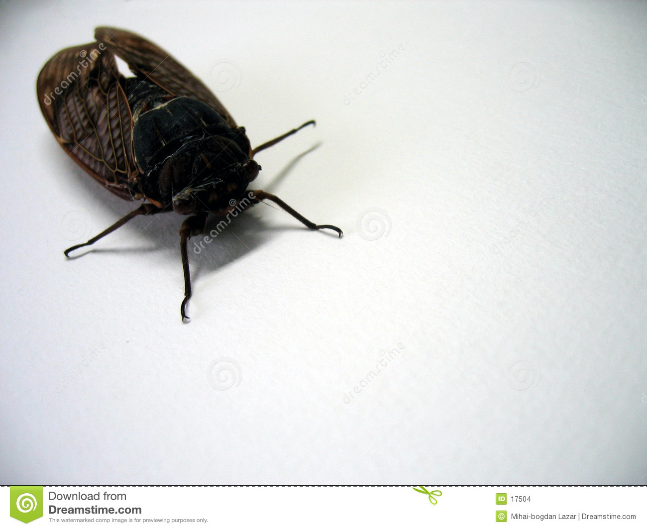 Bug - perspective view