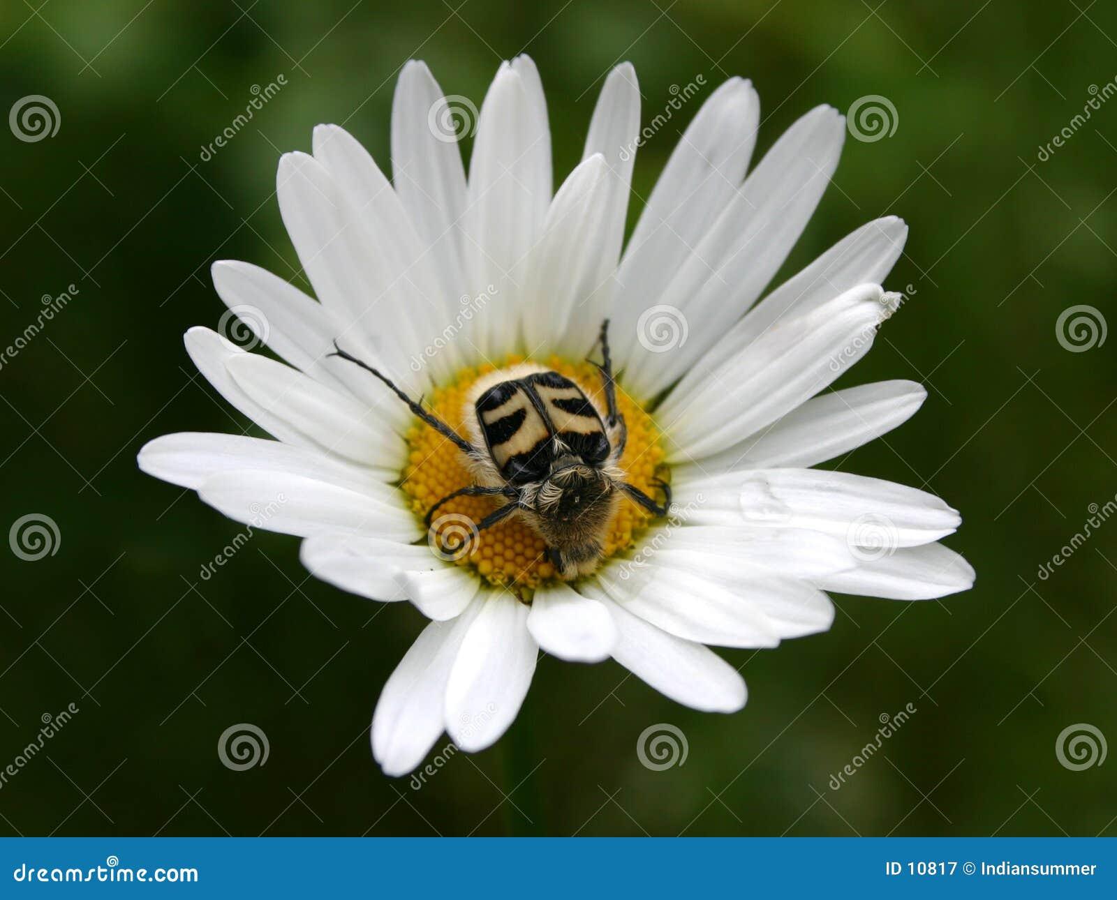 Bug s life V
