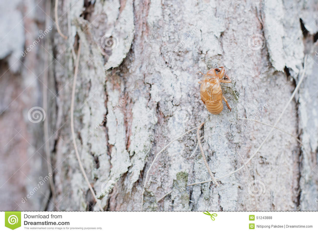 tree insects pictures wallpaper - photo #8