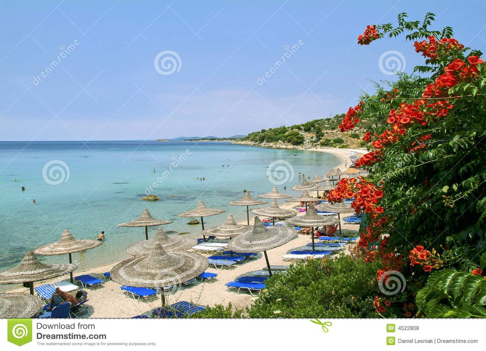 Bughenvilla roślinnych Chalkidiki plażowa
