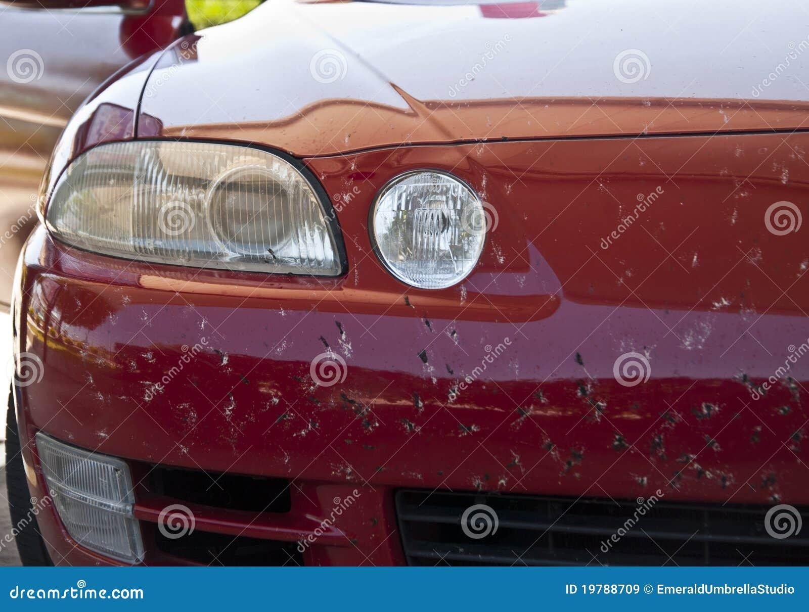 Bugs den räknade bilen