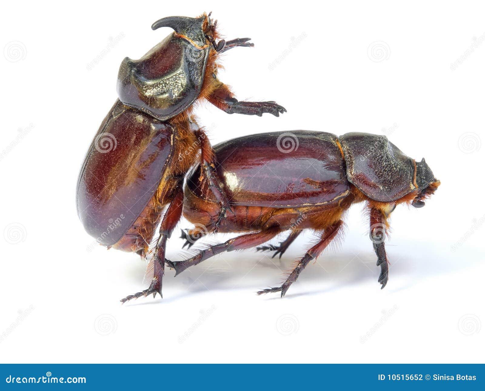 Bugs Sex 103