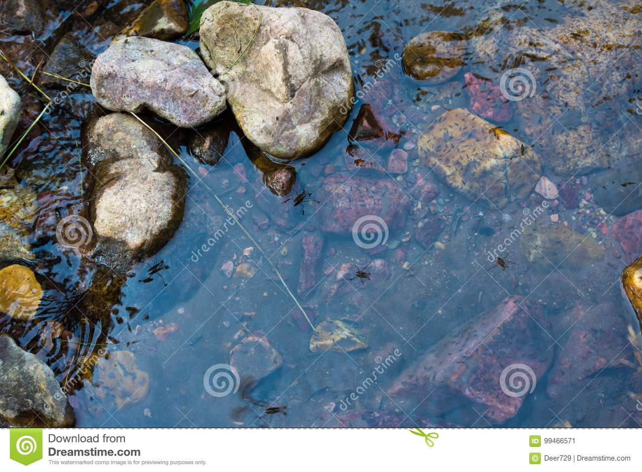 Water Bugs Mountain Trickling Stream Water Scene