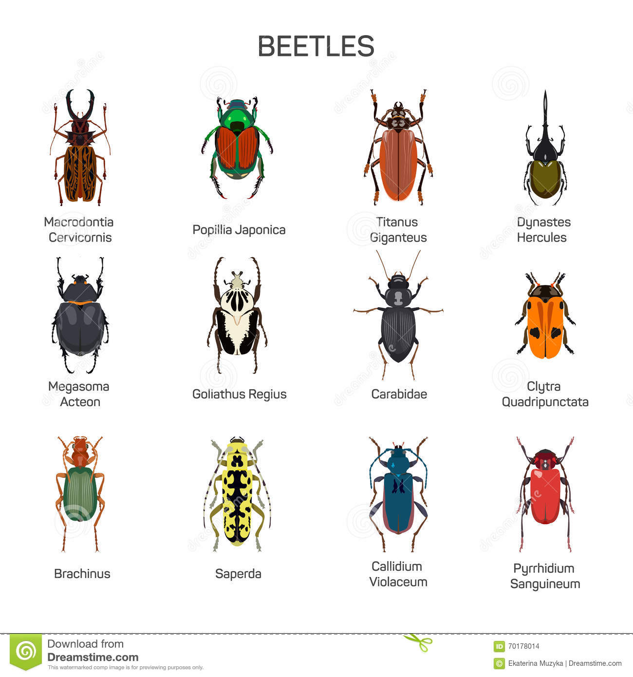Bugs Vector Set In Flat Style Design Different Kind Of Beetles Insect Species Icons Collection