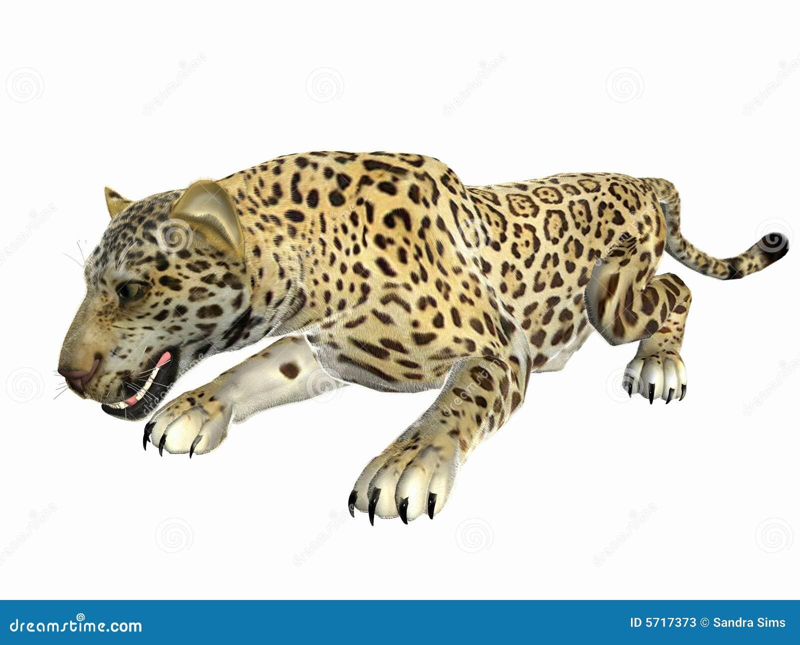 Buigende Jaguar