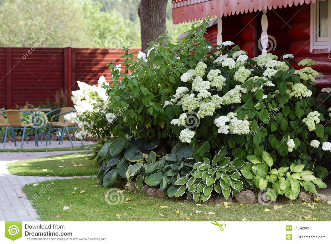 Buisson blanc d 39 hortensia dans le jardin photo stock for Jardines con hortensias