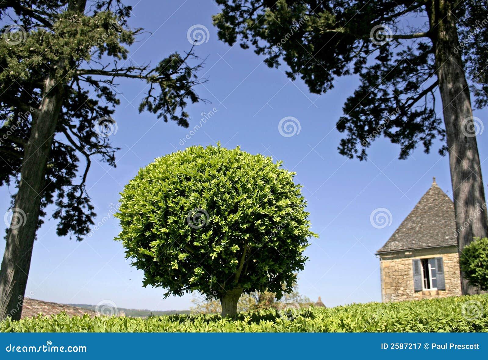 Buisson form de cadre arbre dans le jardin photographie for Arbre buisson pour jardin