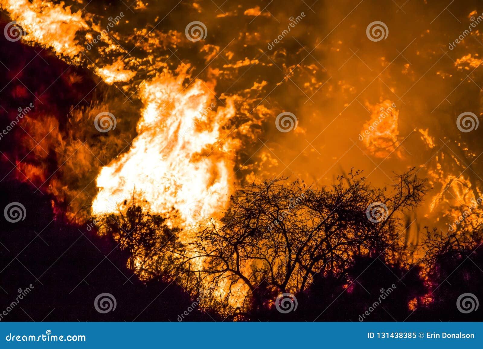 Buissons en silhouette noire dans le premier plan avec les flammes oranges lumineuses à l arrière-plan pendant les feux de la Cal