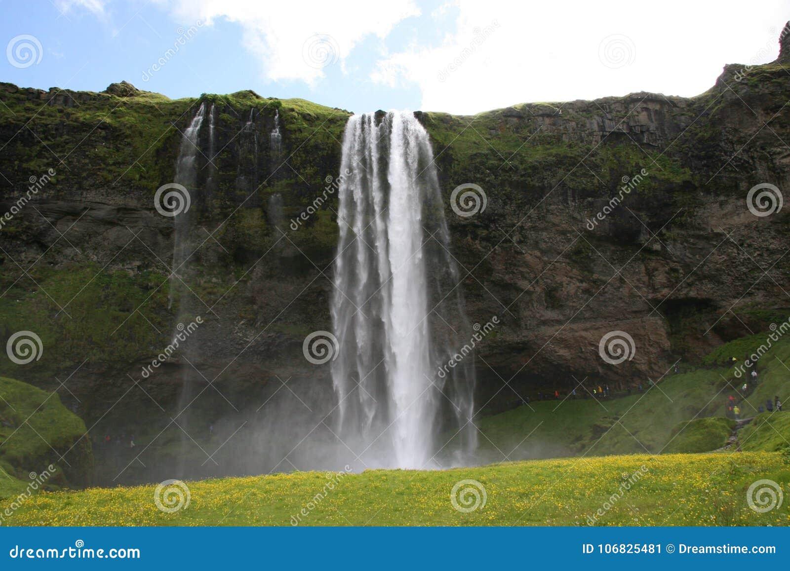 Bujny Seljalandsfoss siklawa w Iceland
