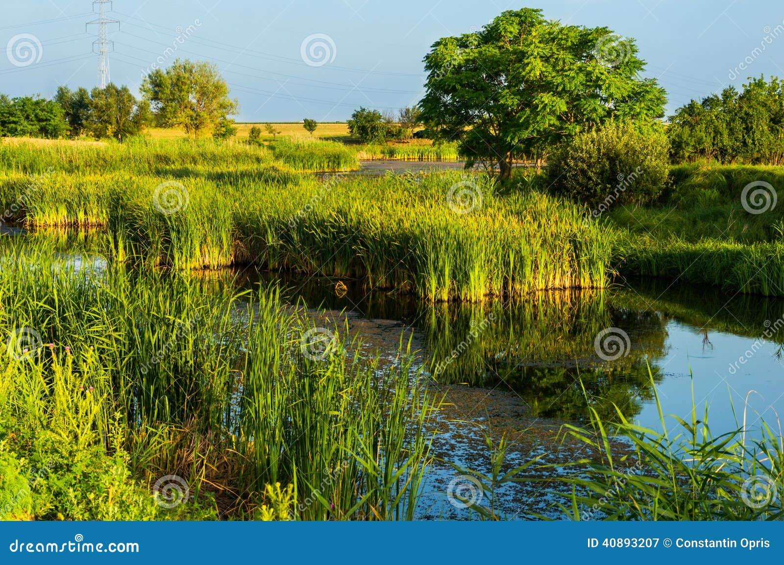 Bujny zielona roślinność
