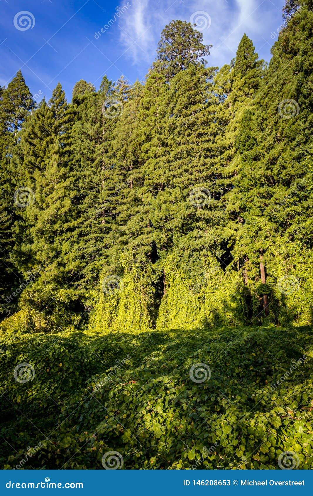 Bujny zielony przyrost