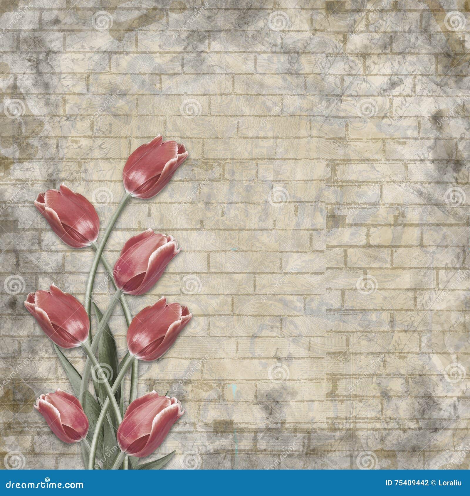 Bukett av härliga röda tulpan på bakgrunden av den målade tegelstenväggen för lyckönskan