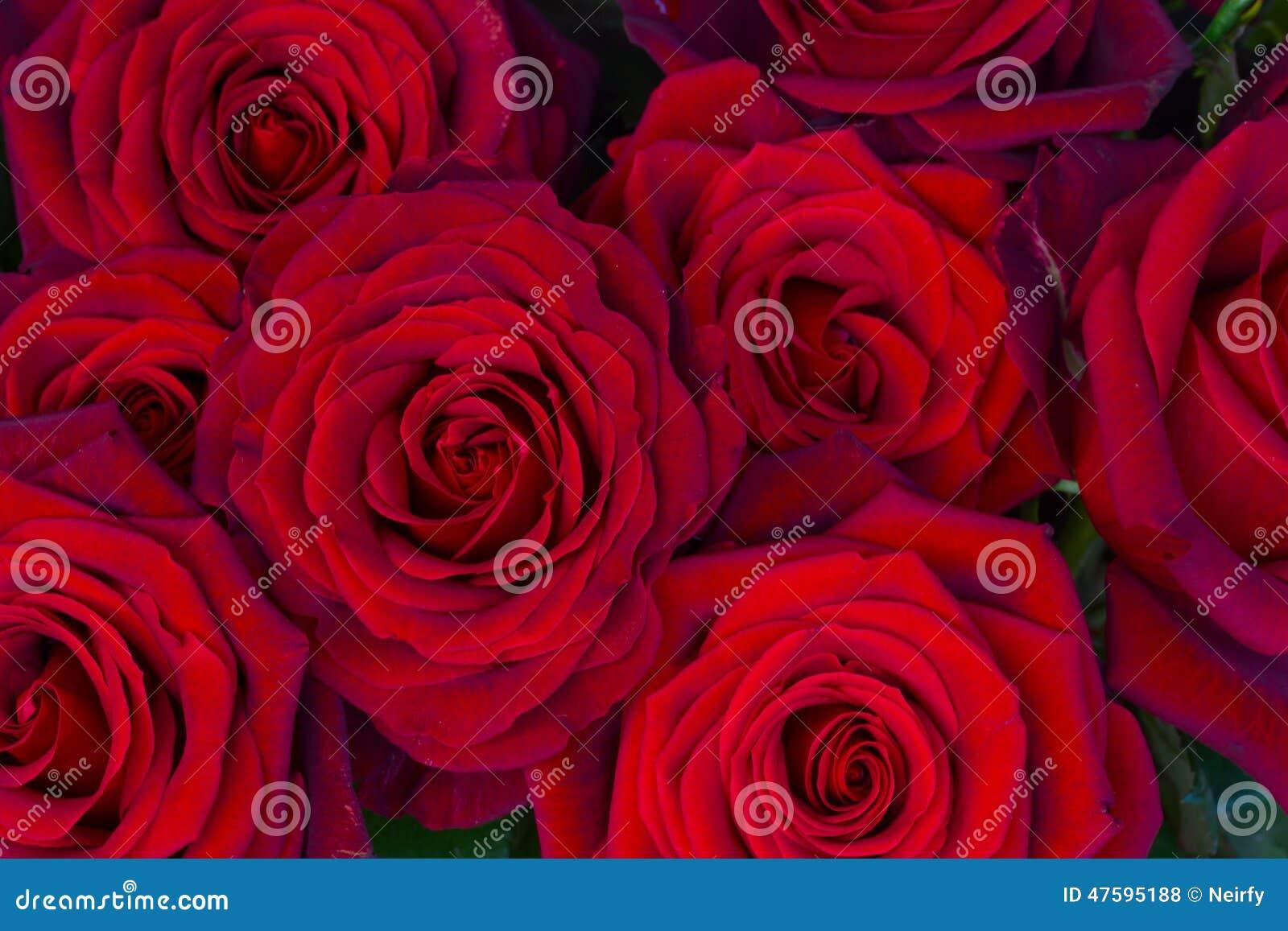 Bukett av mörker - röda rosor