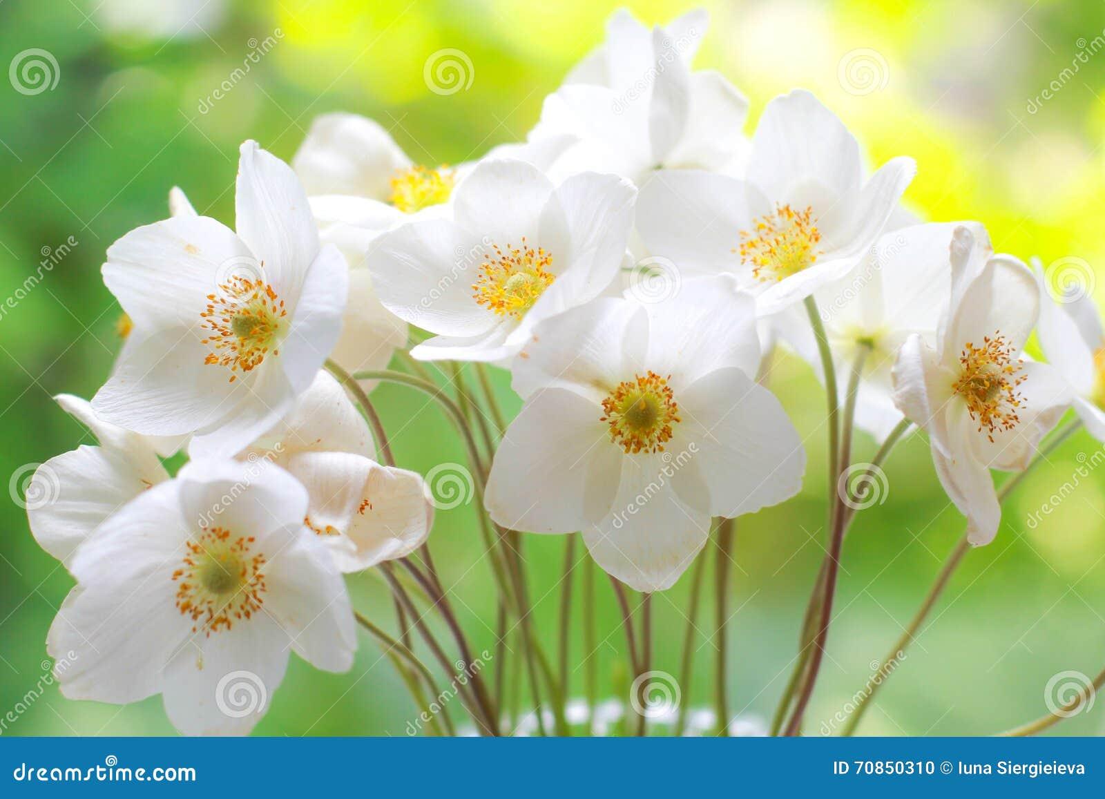 Bukett av vita vildblommor blommar nytt occasions specialen Hälsningkort, beröm, årsdag