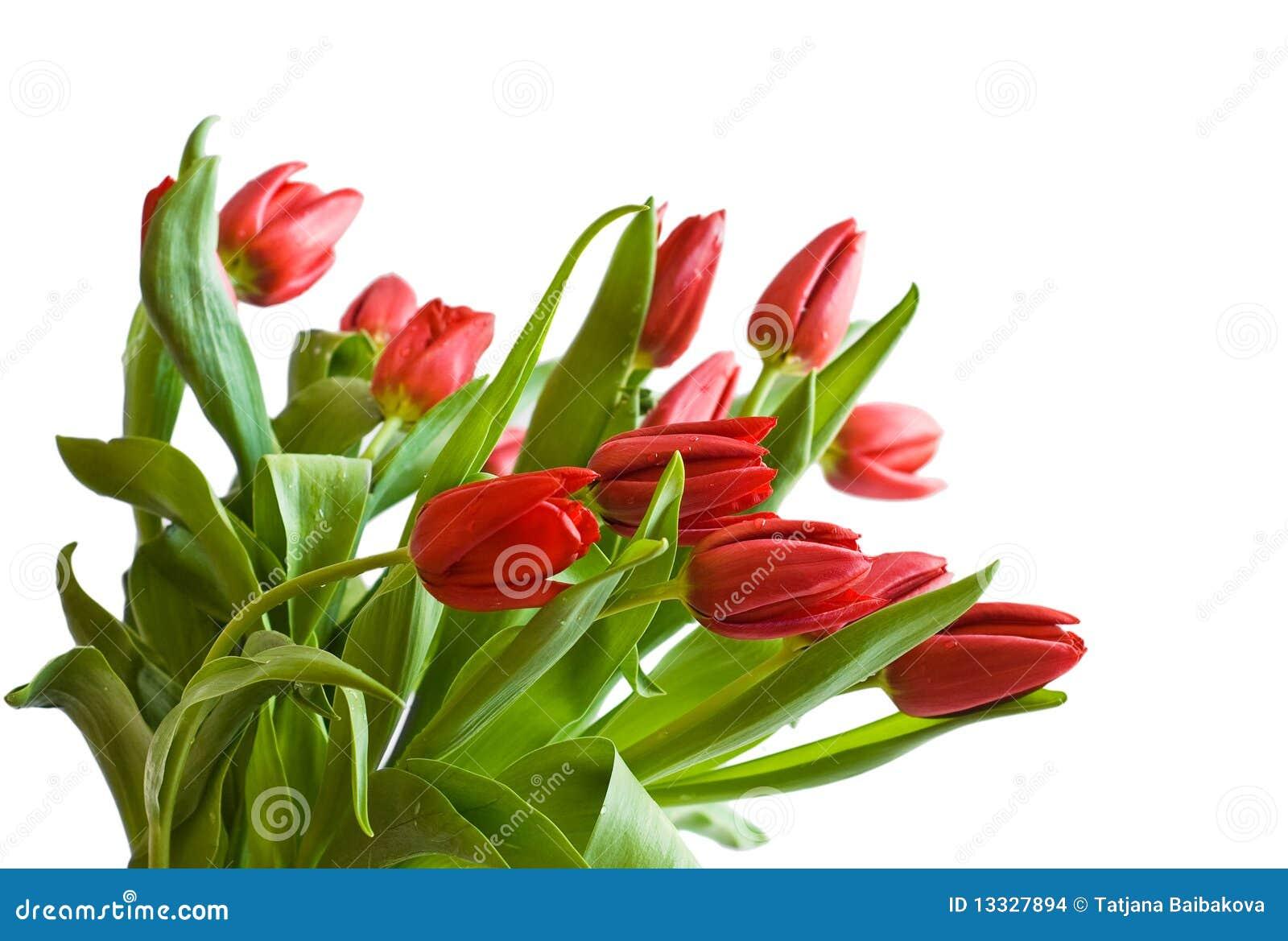 Bukietów tulipany