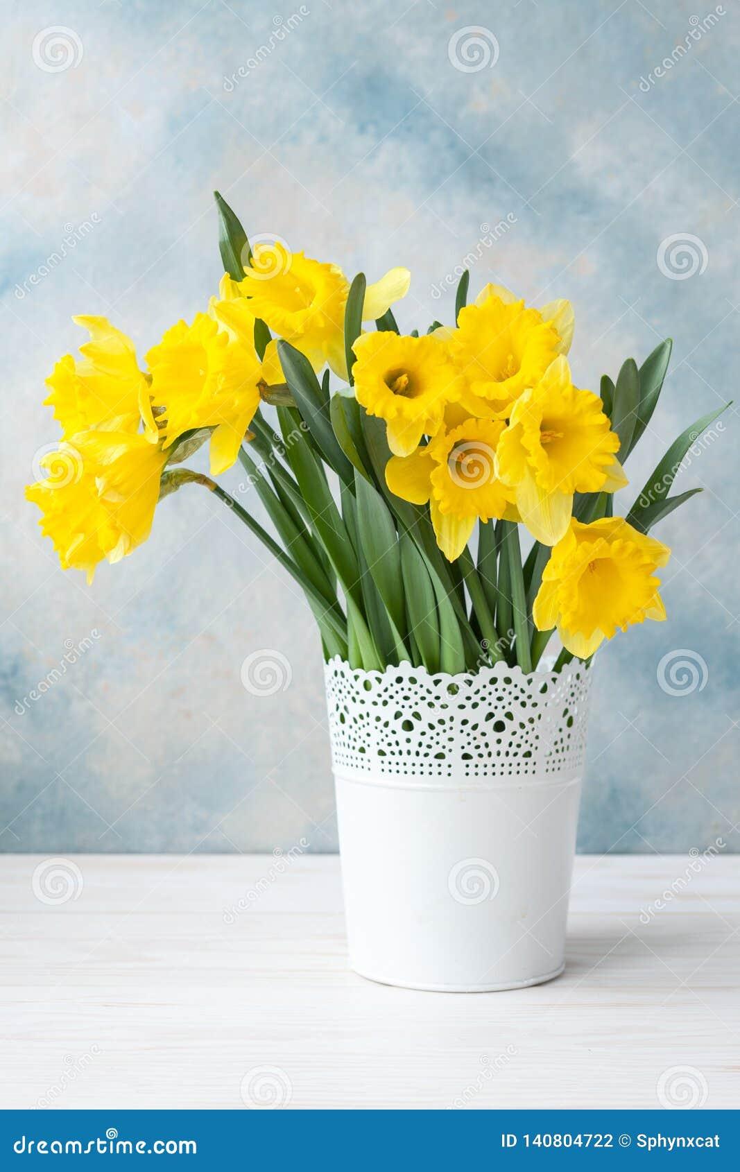 Bukiet świezi żółci daffodils w wazie na nieba błękita tle Pojęcie dla walentynka dnia, poślubia, zobowiązanie, matki da