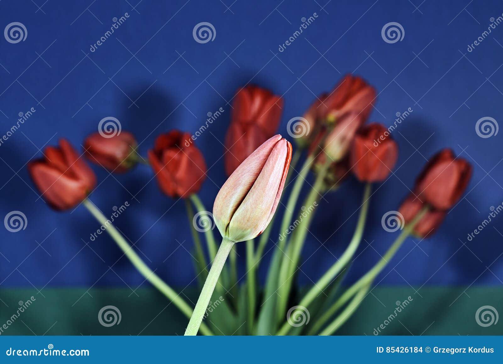 Bukiet piękni kwiaty tulipany