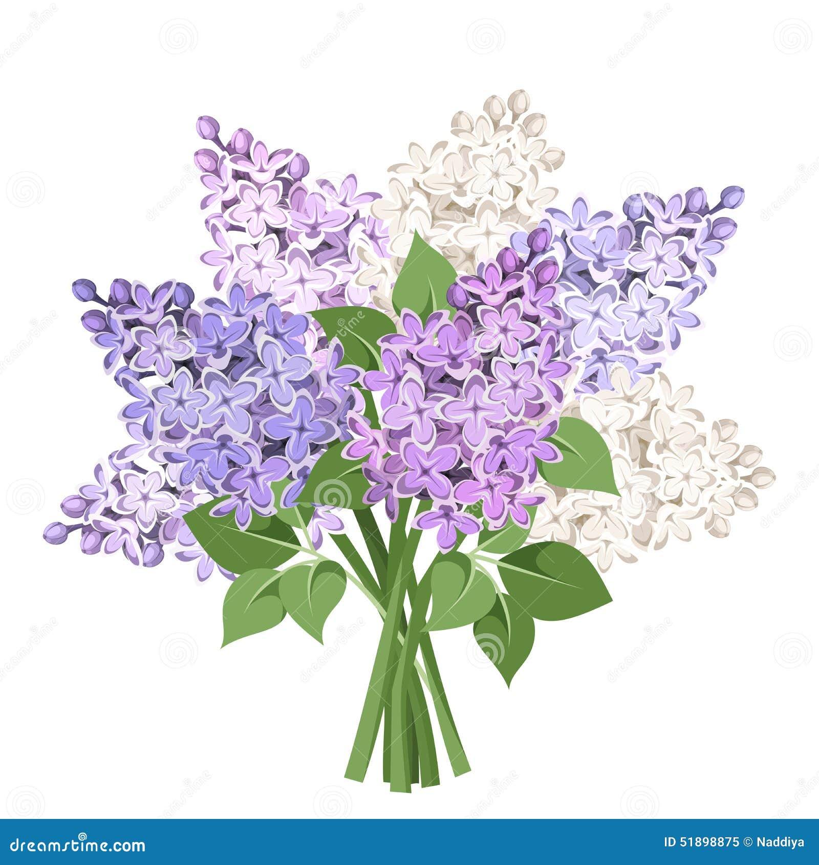 Bukiet purpurowi i biali lili kwiaty również zwrócić corel ilustracji wektora