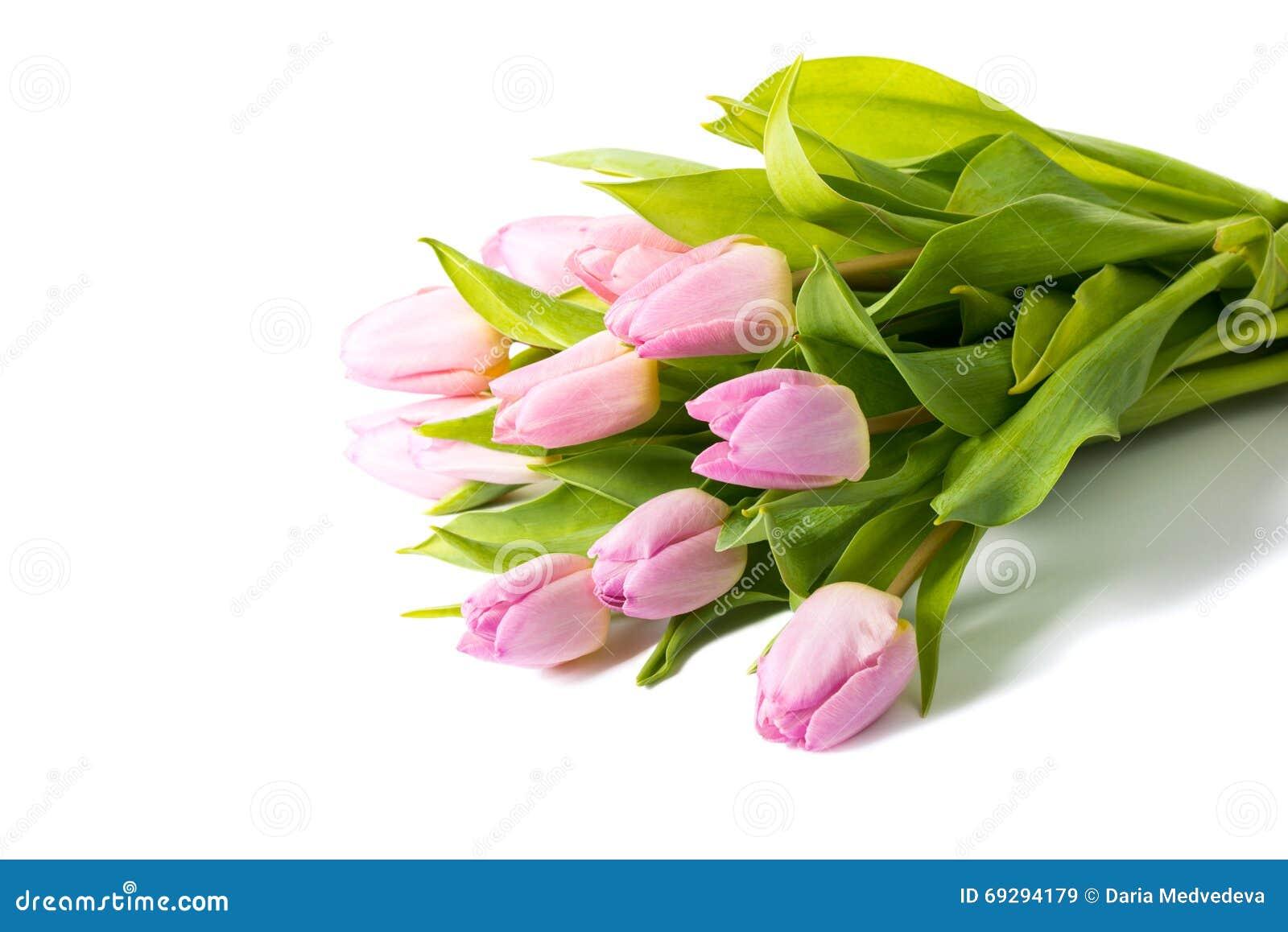 Bukiet różowi tulipany odizolowywający na białym tle