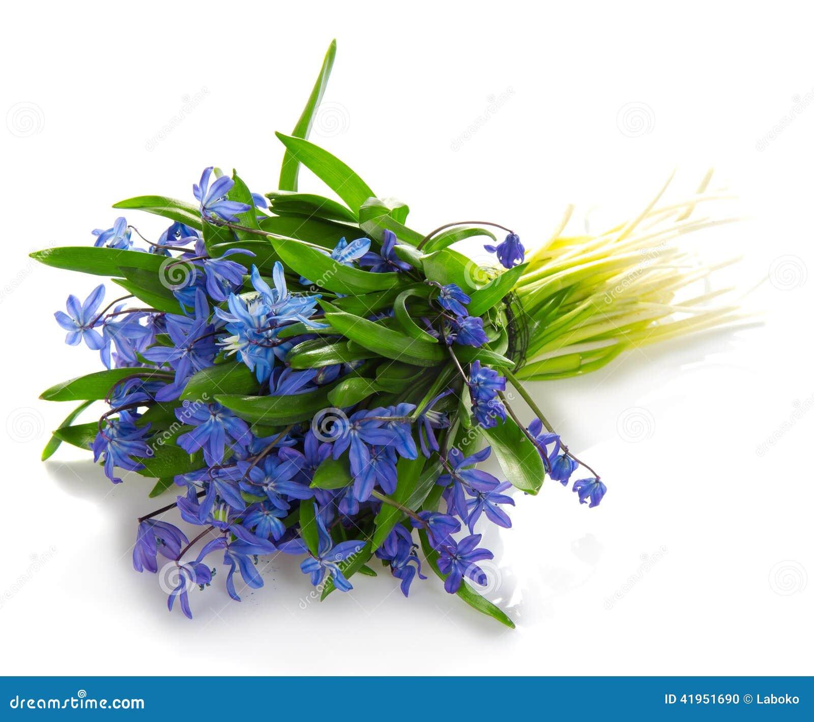 Bukiet wiosna błękitni kwiaty