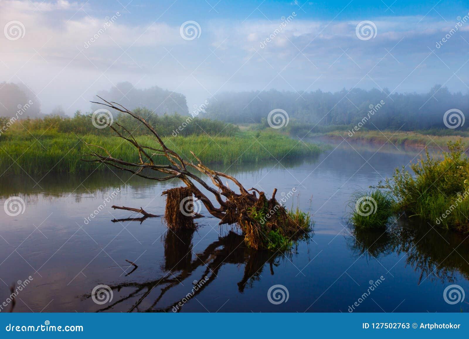 Buktiga gröna ängar för liten flod på soluppgång SOMMAREN landskap