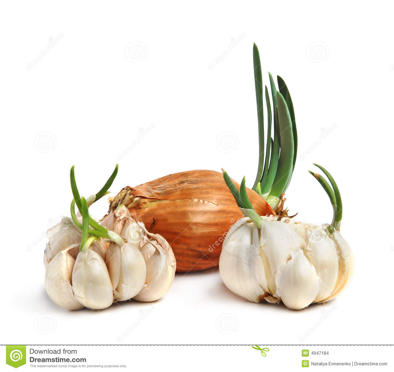 feasibility of cigarette butts and garlic This simple rt-pcr-based experimental method is feasible for rapid  all  saliva dna samples except one (cigarette butt stored for 7 years)  bakri, i m &  douglas, c w inhibitory effect of garlic extract on oral bacteria.