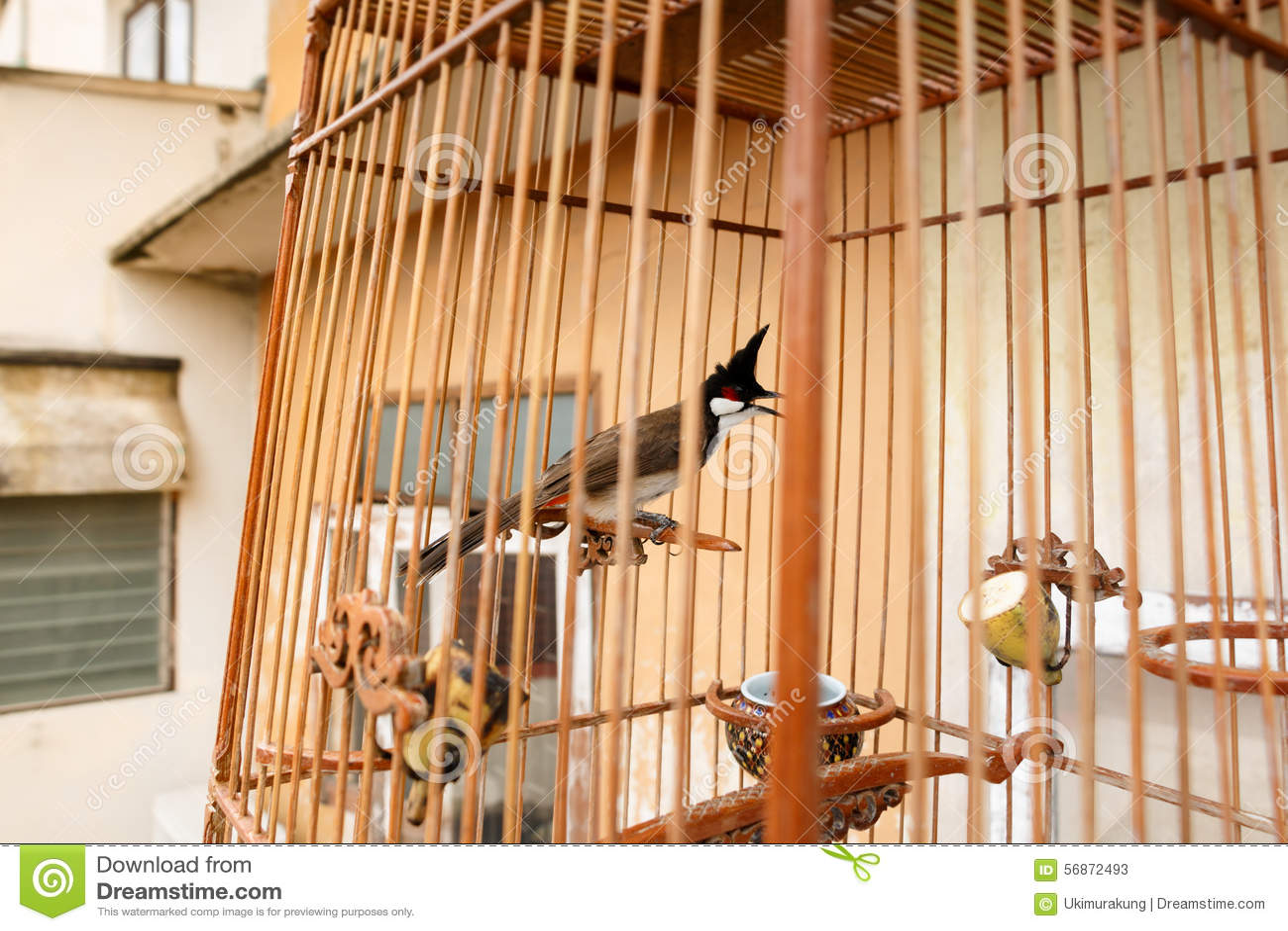 Vogelkooi In Huis : Vogelkooien globosplaza