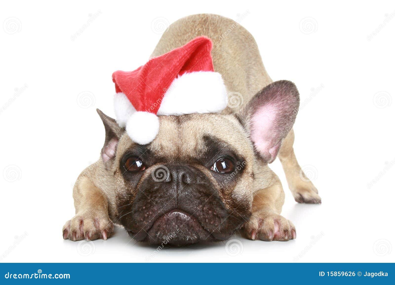 Buldogue francês em um chapéu do Natal