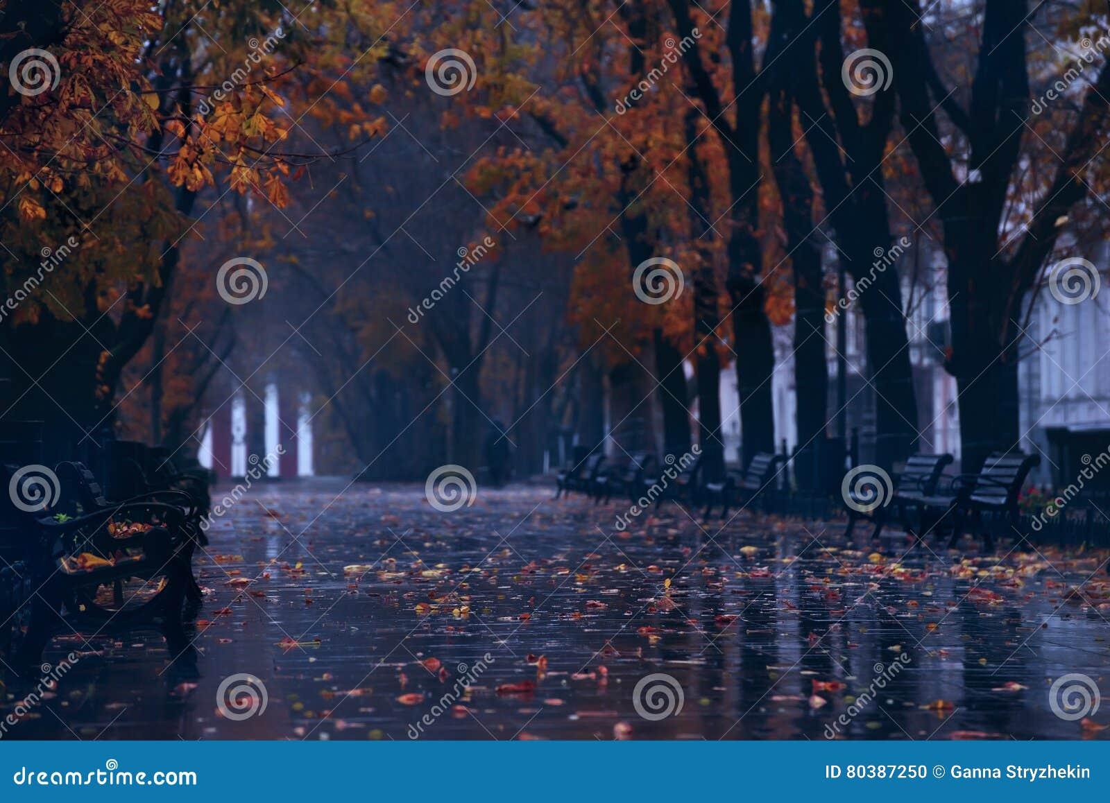 Bulevar del otoño en la lluvia