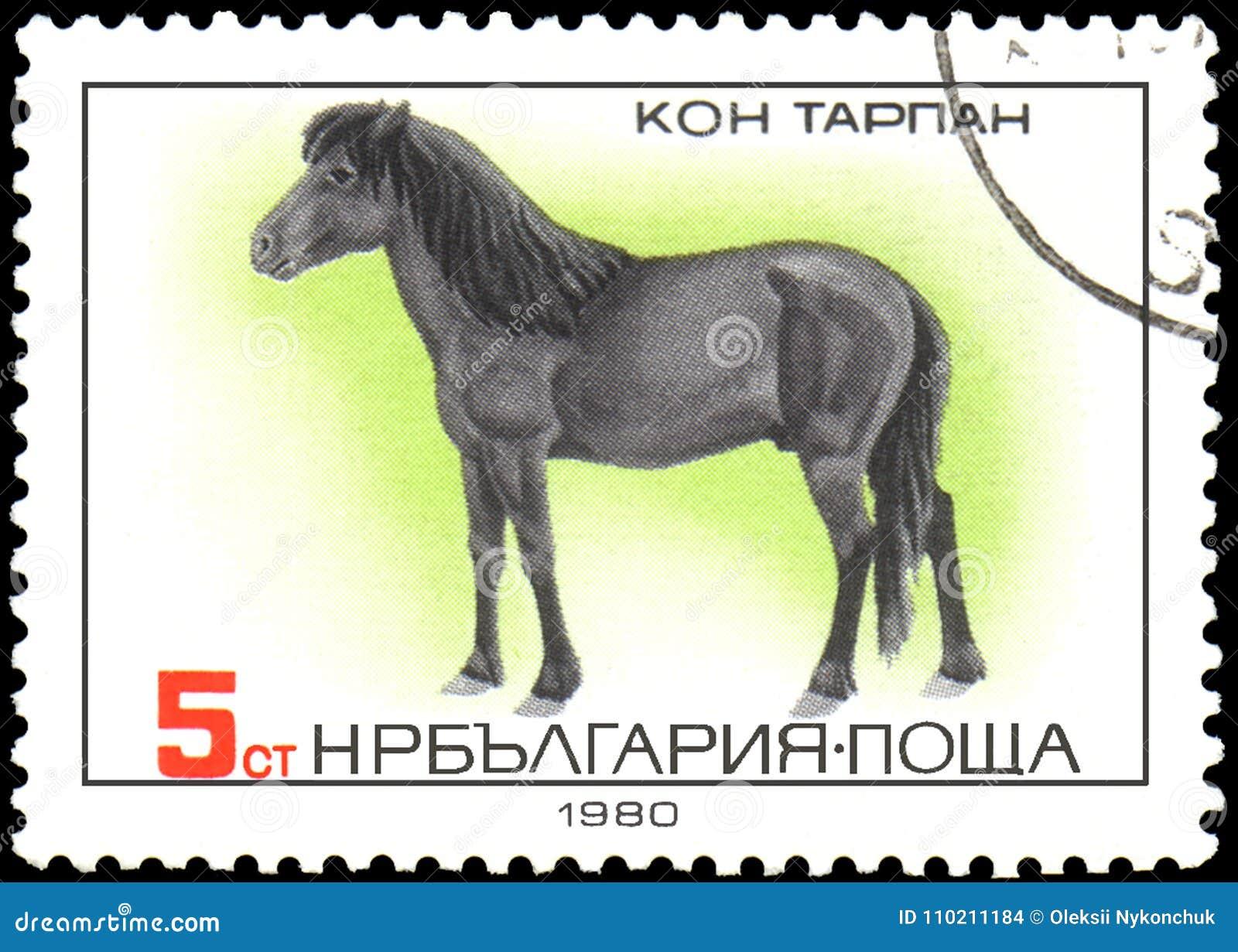 BULGARIEN - CIRCA 1980: en stämpel som skrivs ut i Bulgarien, visar en Tarpan häst