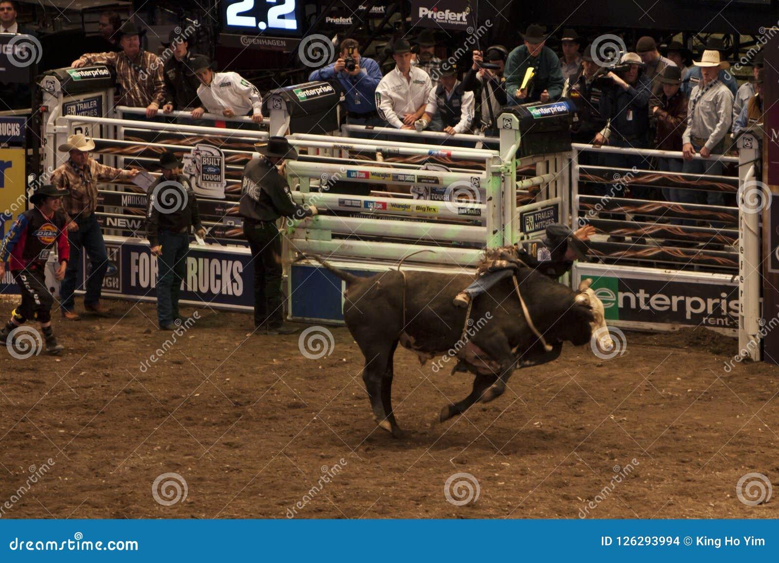 Professional Bull Rider Tournament On Madison Square Garden ...