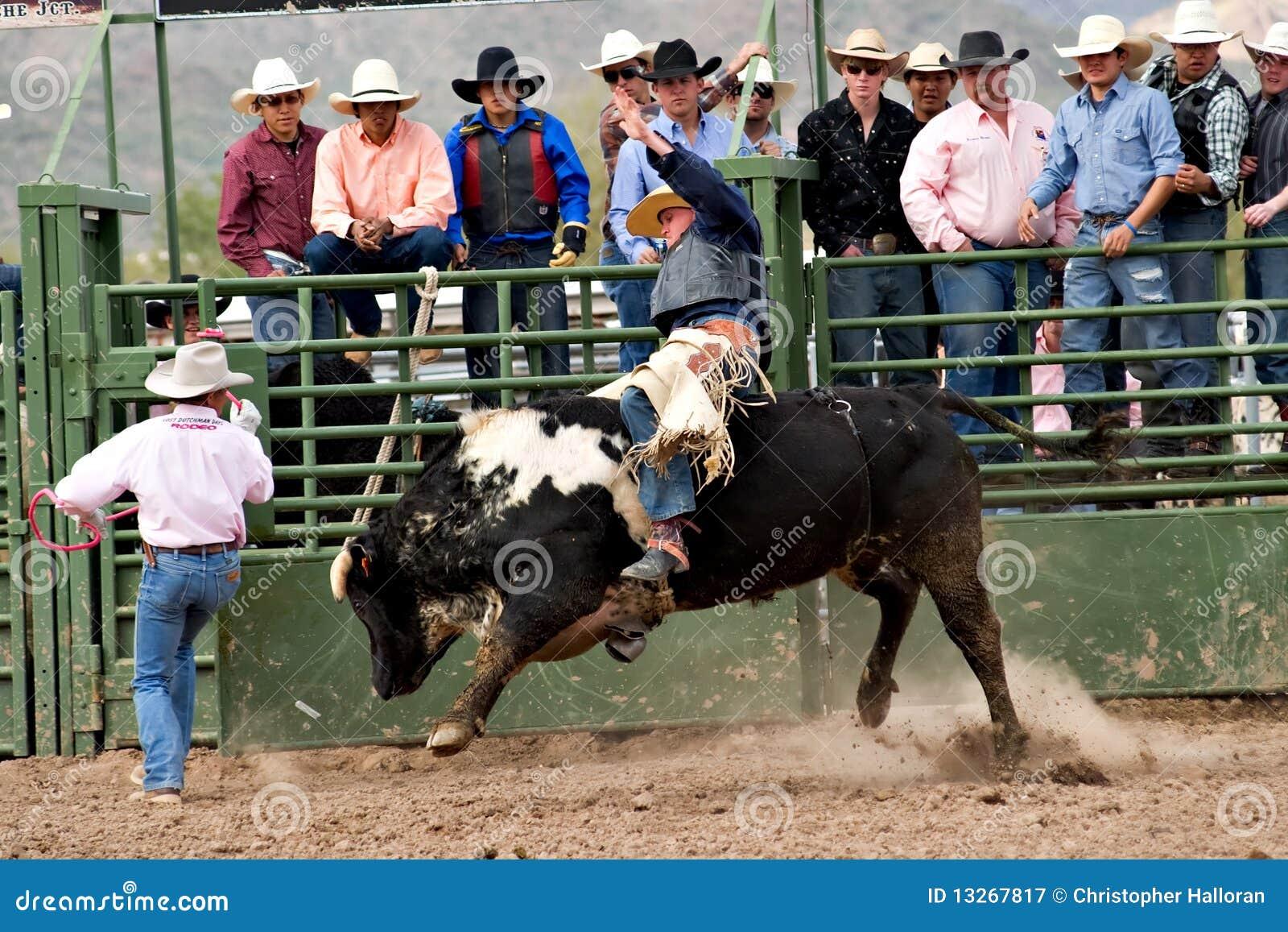 Bull Riding Editorial Photography Image Of Sport Arizona