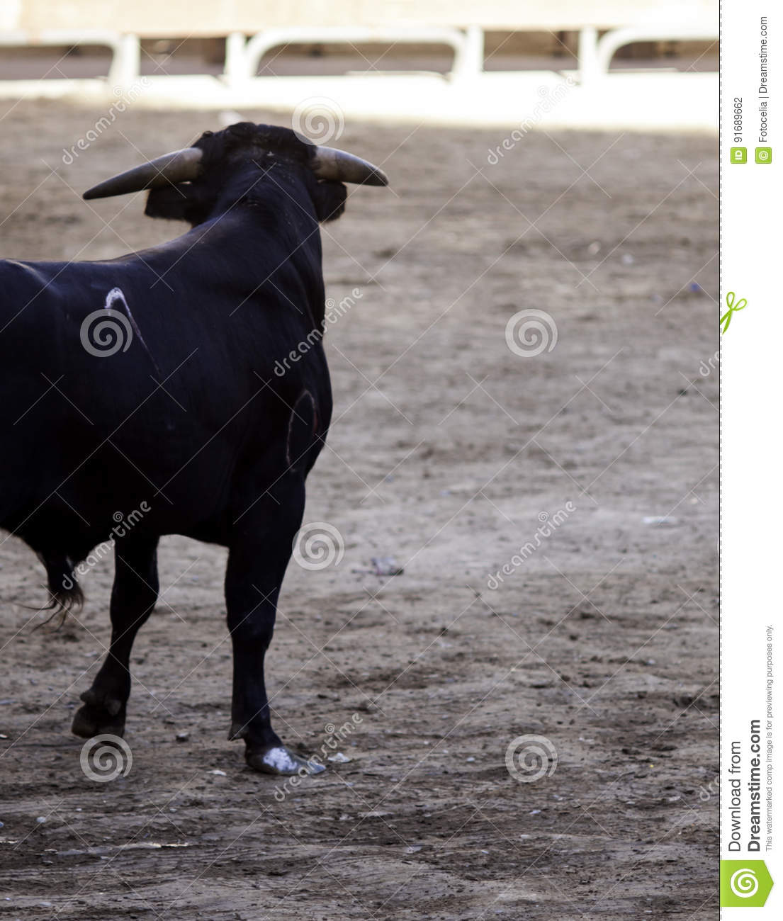Bull in the ring stock photo  Image of blood, arena, black - 91689662