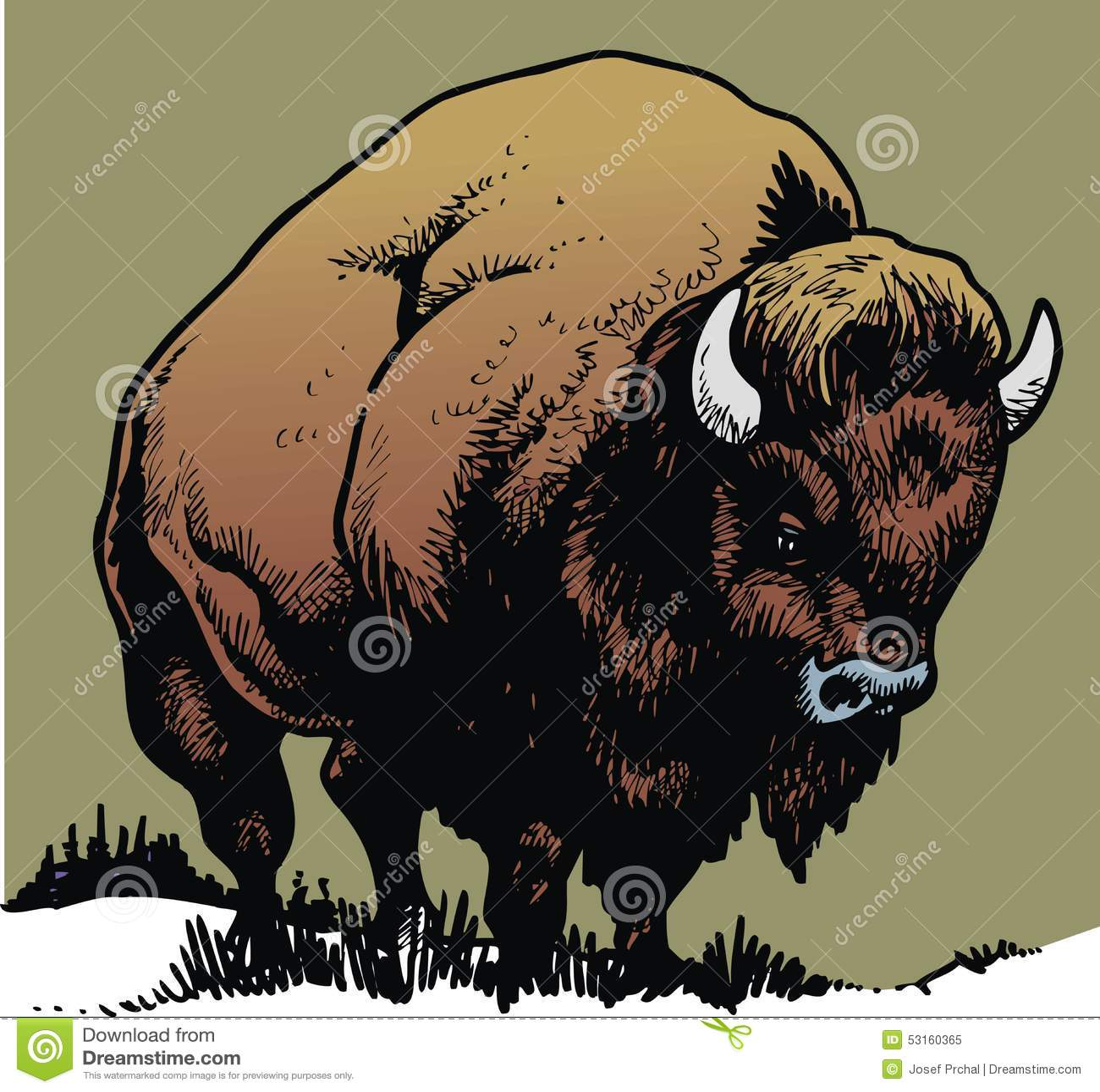 Bull salvaje