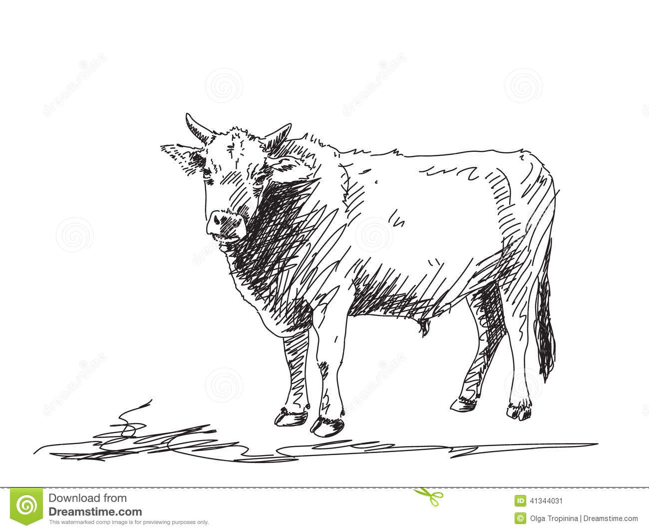 Bull Sketch Stock Vector. Image Of Taurus, Free, Power