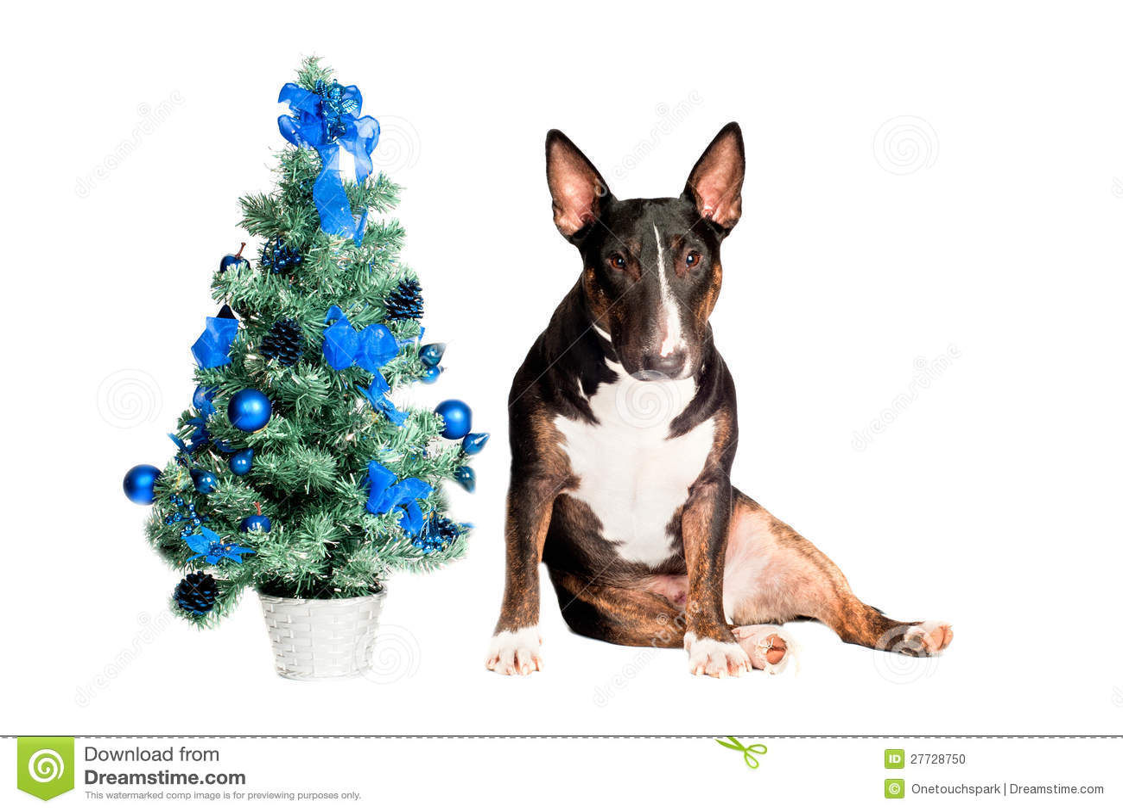 Bull-Terrierhund mit einem Weihnachtsbaum